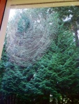 Web at my Window Jane Green 10/2014